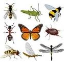 rovar és atkaölők